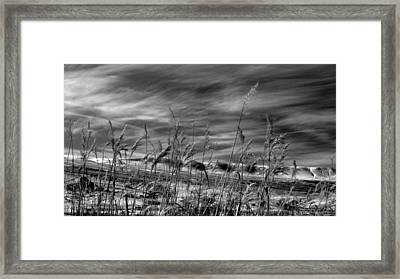 Framed Print featuring the photograph Winters Wheat by Al Swasey