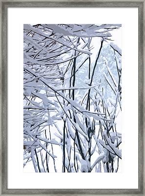Wintertide Framed Print
