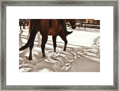 Wintertime Hack Framed Print by JAMART Photography