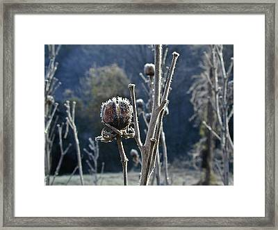 Wintery Begining Framed Print by Douglas Barnett