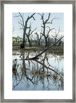 Winton Wetlands Framed Print