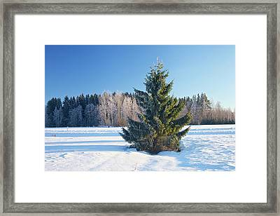 Wintry Fir Tree Framed Print by Teemu Tretjakov