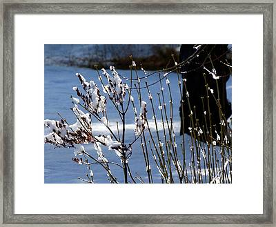 Wintry Lilacs Framed Print by Will Borden