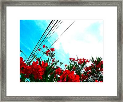 Wire Flowers Framed Print by Chuck Taylor