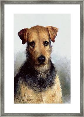 Wire Fox Terrier Framed Print by Lilian Cheviot