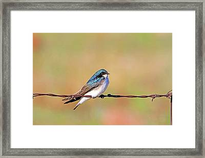 Wired Framed Print by Donna Kennedy