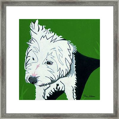 Wirehaired Jack Russell Terrier Framed Print by Slade Roberts