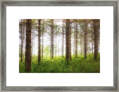 Wisconsin Forest Framed Print