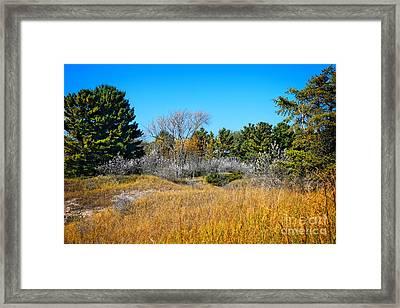 Wisconsin Kohler Andrae State Park Framed Print