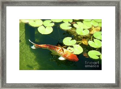 Wisdom Framed Print by Amy Strong
