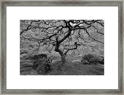 Framed Print featuring the photograph Wisdom Bw by Jonathan Davison