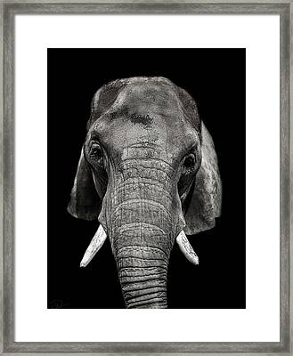 Wisdom Framed Print