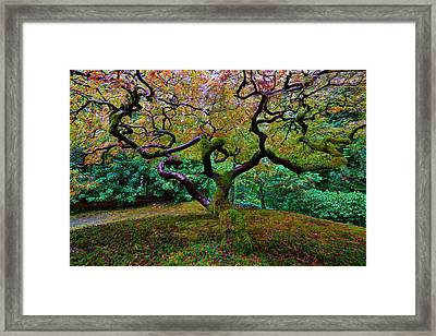 Framed Print featuring the photograph Wisdom Tree by Jonathan Davison