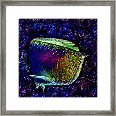 Wise Fish. Muddy Water. Swimming. Framed Print