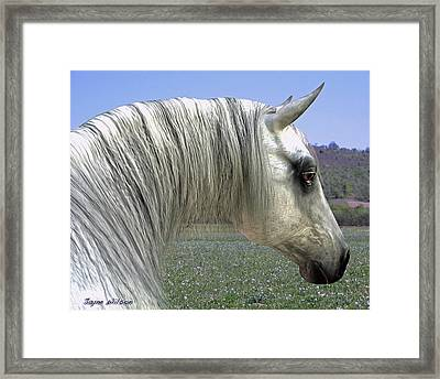 Framed Print featuring the digital art Wise Grey Mare by Jayne Wilson