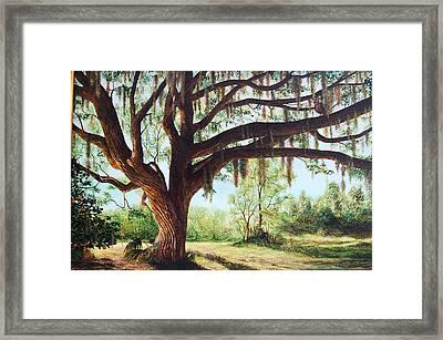 Wise Old Oak Framed Print