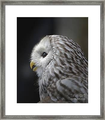 Wise Old Owl Framed Print by Kathy Baccari