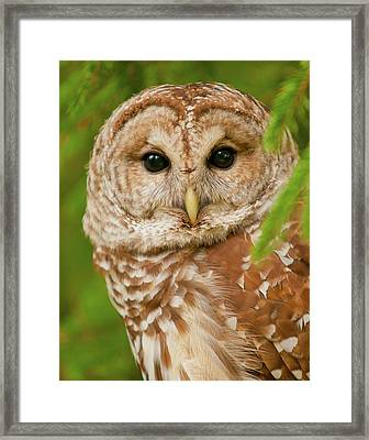 Wise One Framed Print by Ron  McGinnis