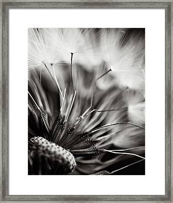 Wish Framed Print