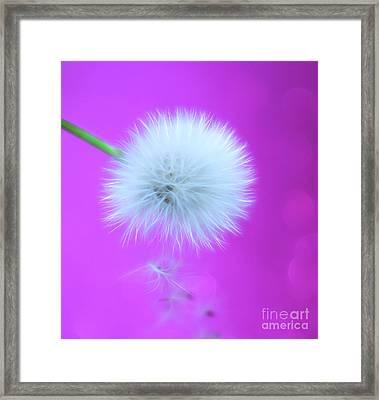 Wish Of Summer Framed Print