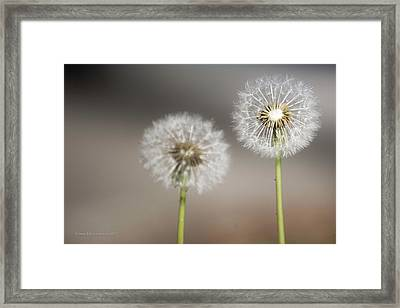 Framed Print featuring the photograph Wish On Me by Lora Lee Chapman