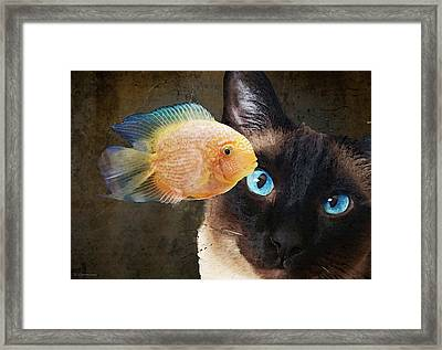 Wishful Thinking 2 - Siamese Cat Art - Sharon Cummings Framed Print by Sharon Cummings