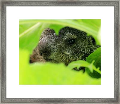 Wishful Thinking Framed Print by Elizabeth Sullivan