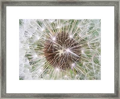 Wishful Thinking Framed Print by Mindy Newman