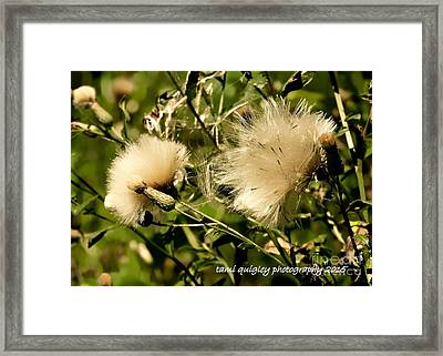 Wisp Of A Summer Morn Framed Print by Tami Quigley