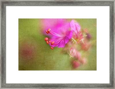 Wisp Of Spring Framed Print by Sharon Johnstone