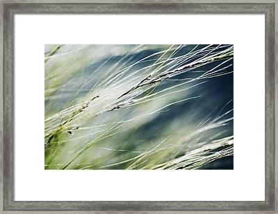 Wispy Grass Framed Print by Ray Laskowitz - Printscapes