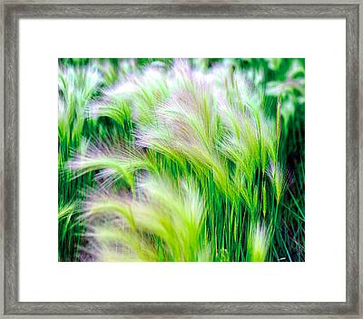 Wispy Green Framed Print