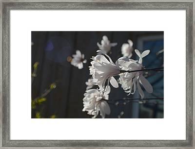 Wipsy Mini Magnolias Framed Print by Tina M Wenger