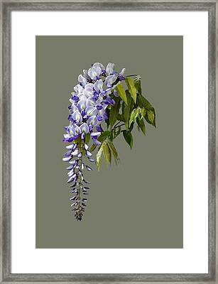 Wisteria And Leaves Framed Print by Susan Savad