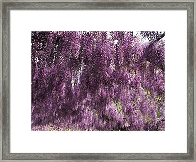 Wisteria Arbor At The Bardini Gardens Framed Print by Gerald Hiam