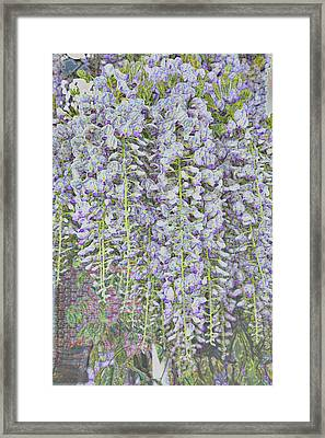 Framed Print featuring the photograph Wisteria Before The Hail by Nareeta Martin