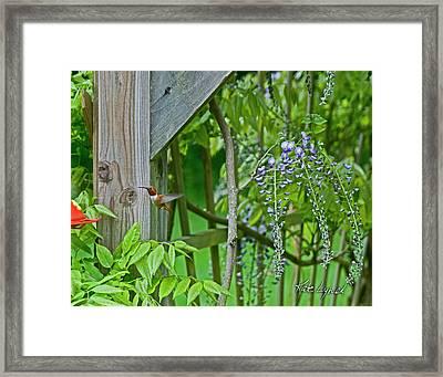 Wisteria Boy Framed Print