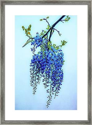 Framed Print featuring the photograph Wisteria by Chris Lord