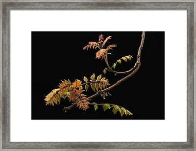 Wisteria Colors Framed Print