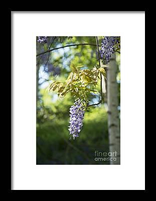 Floribunda Framed Prints