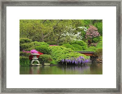 Wisteria In A Japanese Garden Framed Print