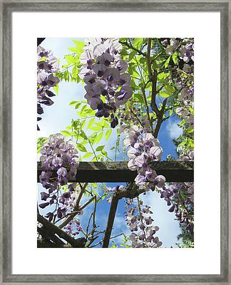 Wisteria In The Garden Framed Print