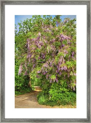 Wisteria Lane Framed Print by Lori Deiter