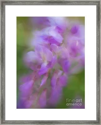 Wisteria Mist Framed Print by Judi Bagwell
