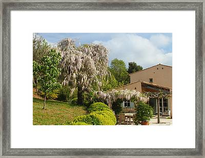 Framed Print featuring the photograph Wisteria by Richard Patmore