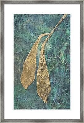 Wisteria Seed Pods Framed Print by Diana Davenport