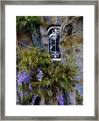 Wisteria Window Framed Print