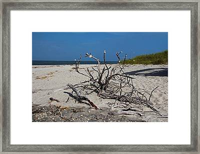 Framed Print featuring the photograph Wistful But Unwavering by Michiale Schneider