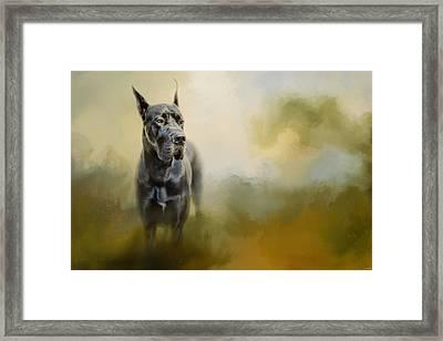 Wistful Dane Framed Print