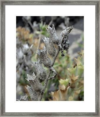 Witches Brew 4 - Hyoscyamus Albus Framed Print